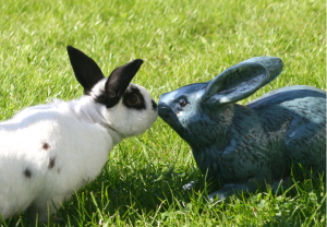 A rabbit kissing a rabbit shaped garden ornament