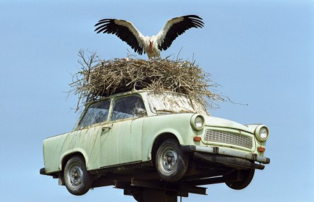 A bird nesting on top of a car to show long distance dating in the countryside