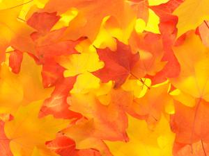 Outdoor Ideas October