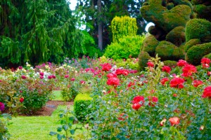 Outdoor date idea – take a stroll around a beautiful garden