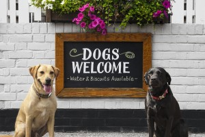 What you need to know about Dating a Dog Lover