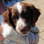 Photo Call – Puppy Mania at Muddy Matches