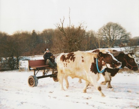 Lydya being pulled along by two oxen