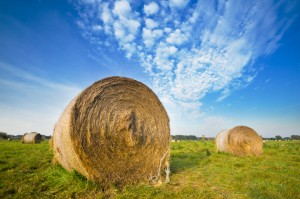 Hay against a bright blue sky.