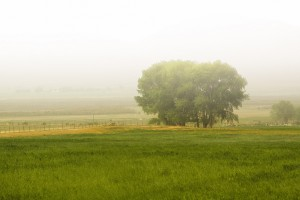 A tree on a grassy meadow in the mist