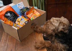 Photo of a pooch pack dog box with a Welsh Terrier